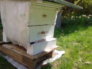 Back in beesness 3